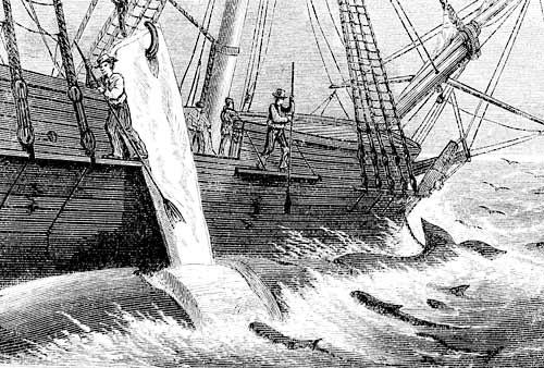 """Ilustração que compõe """"Moby Dick"""""""
